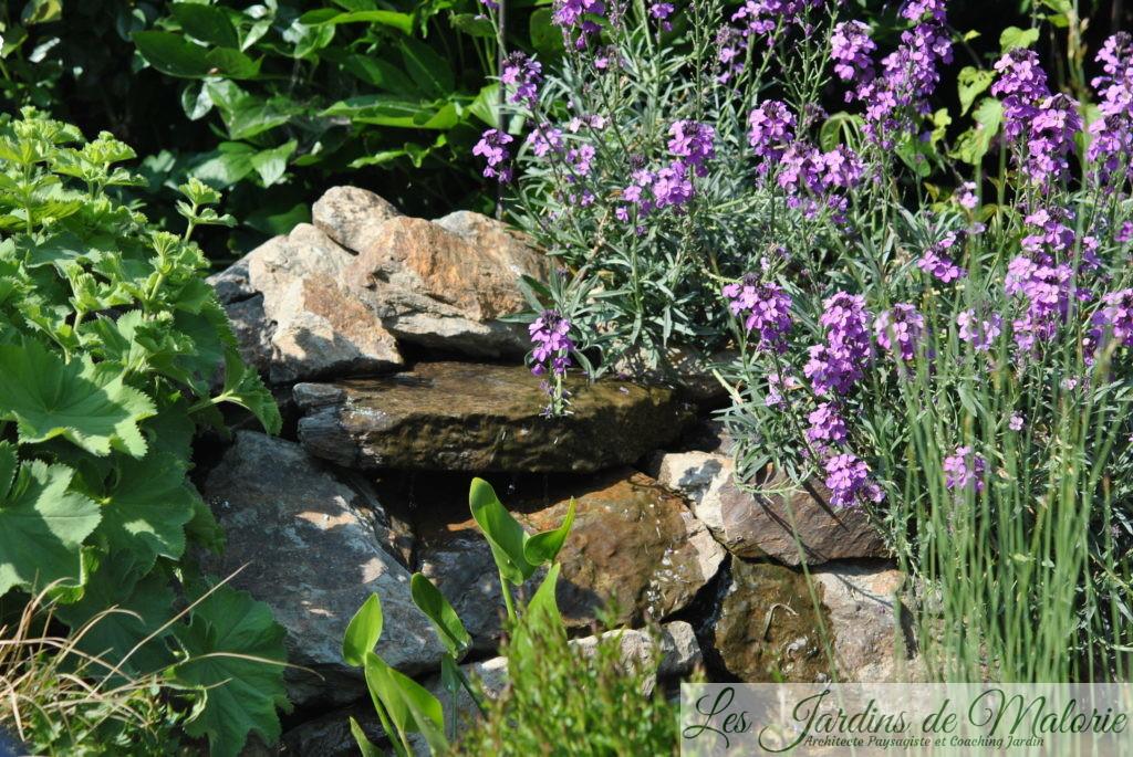sur la cascade du petit bassin, l'erysimum 'Bowles mauve'