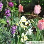 🌷 Chroniques de mon jardin : Tulipes, narcisses & Cie (2)