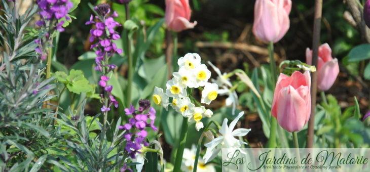  Chroniques de mon jardin : Tulipes, narcisses & Cie (2)