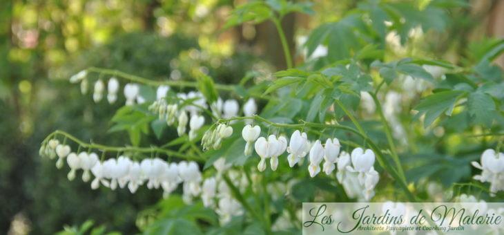 Chroniques de mon jardin : Dans le massif au nord