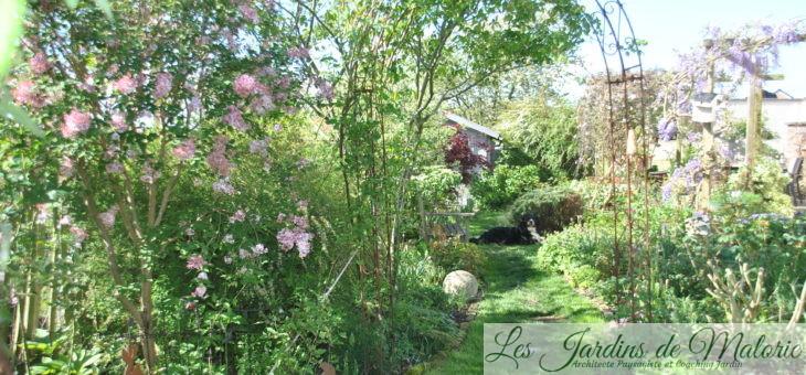 Chroniques de mon jardin: Soleil et pluie ont boosté les plantes!