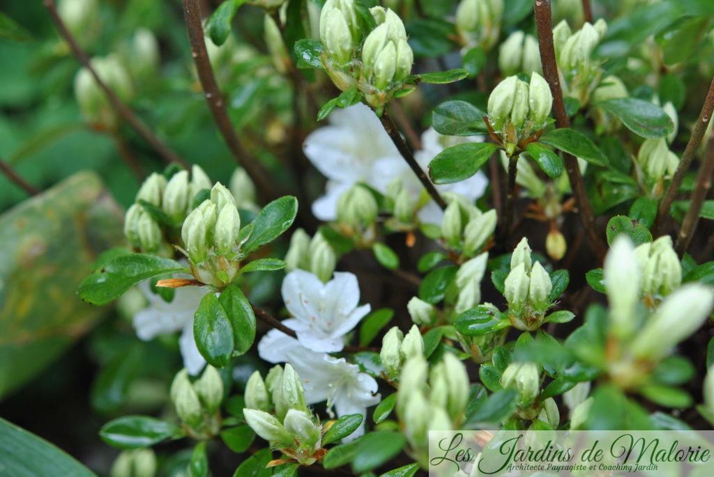 Chroniques de mon jardin : Dans le massif au nord - Les Jardins de ...