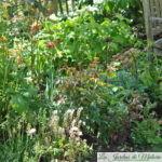 Tiarella, fougères et tulipes...