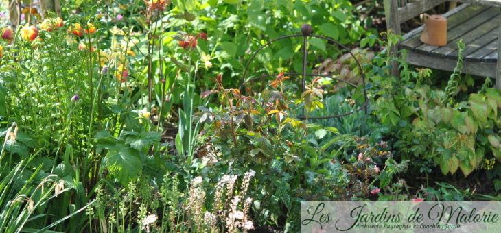 Tiarella, fougères et tulipes…