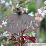 Jardin ouvert : Bienvenue au jardin!