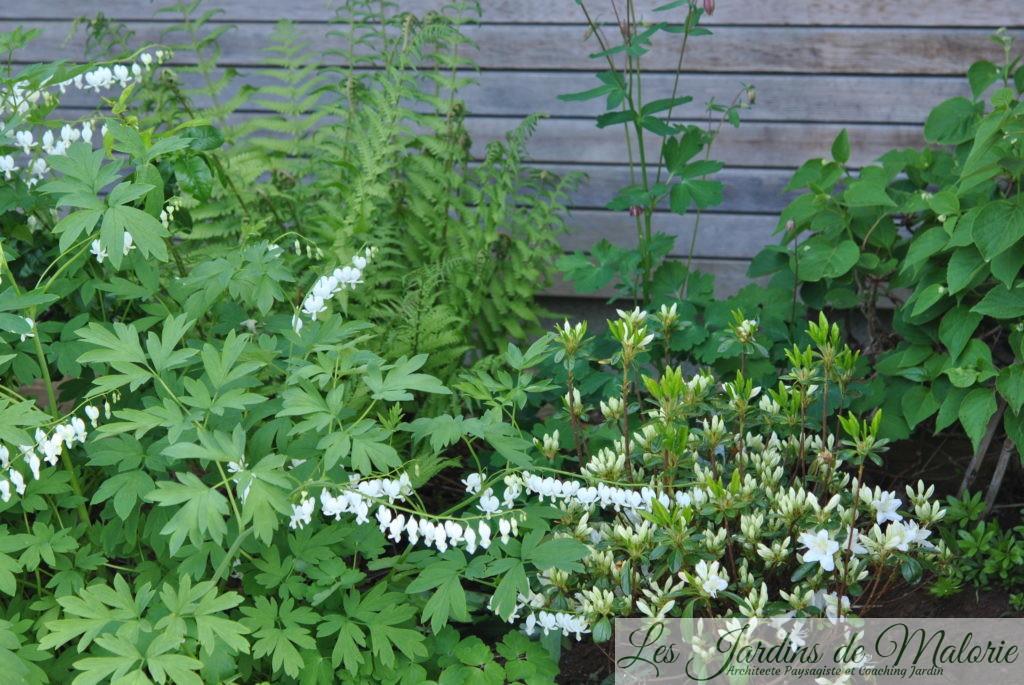 Chroniques de mon jardin : Dans le massif au nord - Les ...