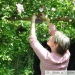 Au jardin personnel d'André Eve : étiquetage des rosiers