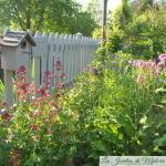 Dans le Jardin Secret de Sophie et Olivier