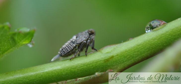 🐝  Macro d'insectes : Drôles de bêtes! (2)