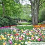 🌷 Visite de jardin : le parc floral du Keukenhof