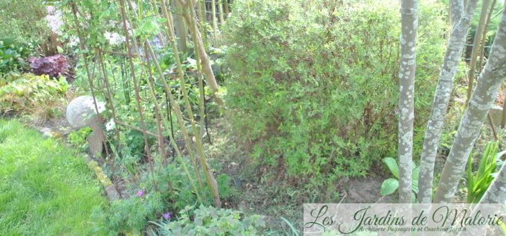 Travaux du mois de Mai au jardin