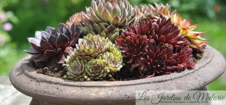 Déco: une vasque de succulentes