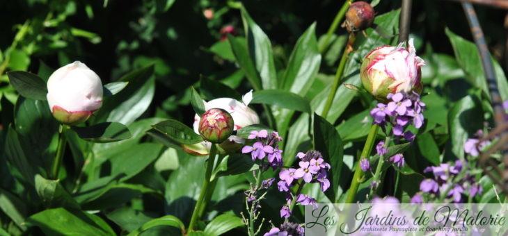 Chroniques de mon jardin : dans les starting block!