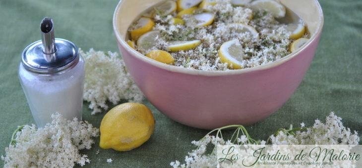 Sirop de fleurs de sureau: délicieux rafraîchissement!
