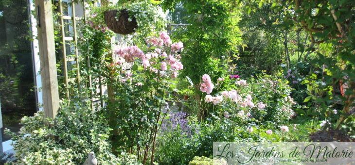 Chroniques de mon jardin: début d'été…