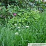Sécheresse & canicule: pour que le jardin tienne le coup...