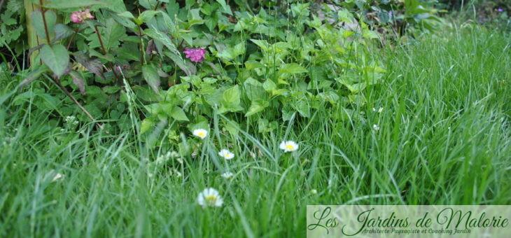 Sécheresse & canicule: pour que le jardin tienne le coup…