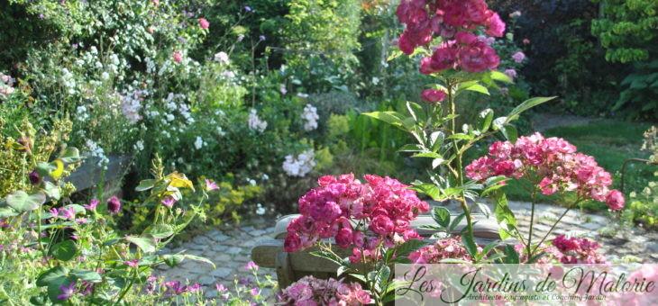 Chroniques de mon jardin: Beautés de juillet