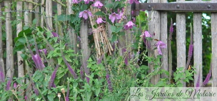 Chroniques de mon jardin: fait chaud!