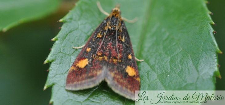 🦋 Papillon de menthe