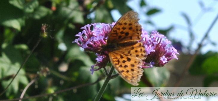 Recensement des papillons du jardin pour Natagora (2019)