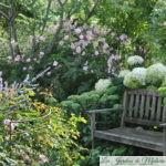 Chroniques de mon jardin: début août au jardin