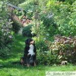 Chroniques de mon jardin: Beautés d'été