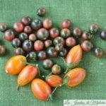 Des plants de tomate en pot