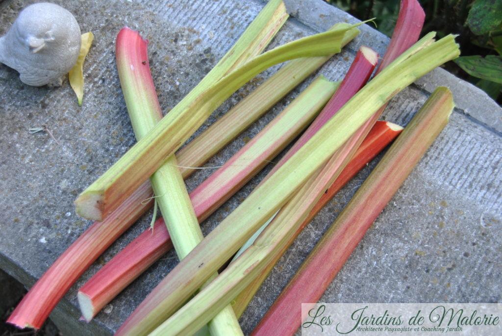 rhubarbe, les pétioles des feuilles, ou bâtons de rhubarbe, sont consommés, le plus souvent cuits, en tartes, en confiture ou comme légume.