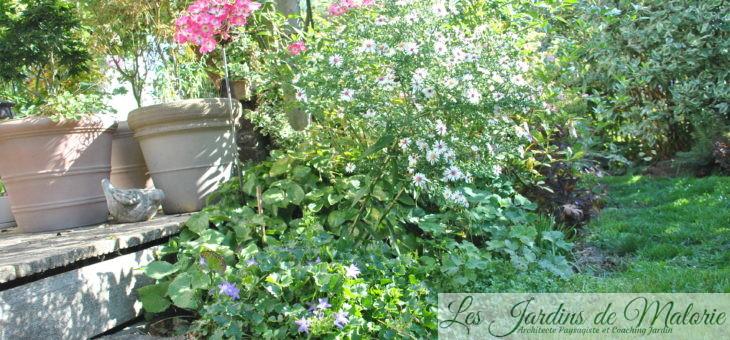 🐾 Chroniques de mon jardin : A la miaoû