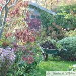 Chroniques de mon jardin :Début novembre