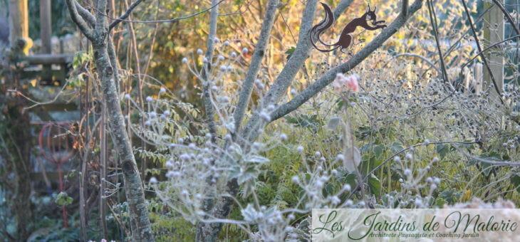 Chronique de mon jardin : matin givré