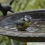 Recensement des oiseaux pour Natagora, ces 1 et 2 février 2020