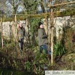 Avec les Amis d'André Eve: taille et palissage des rosiers lianes