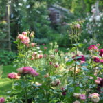 📅 Jardin ouvert : Bienvenue chez moi!