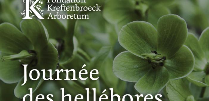 📅 A Kreftenbroeck, la Journée des Hellébores ce 1er mars