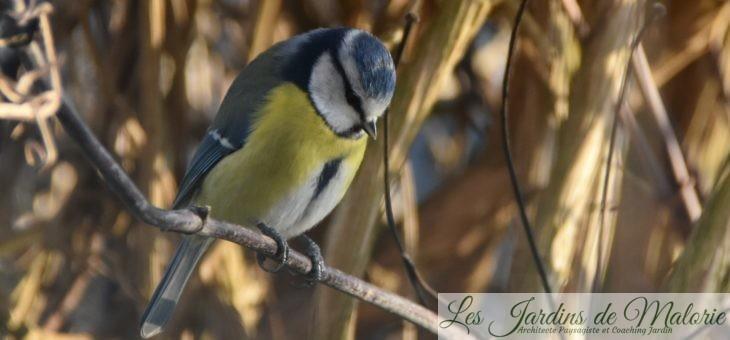 🐦 Comptage des oiseaux du jardin pour Natagora (2020)