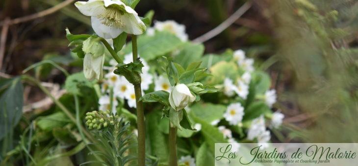 Chroniques de mon jardin: Quelques trésors de février