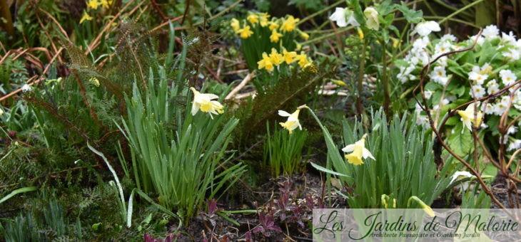 Un souffle de printemps…