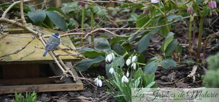 Chroniques de mon jardin : prémices du printemps