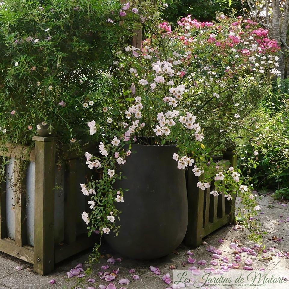 Pot Jardin Grande Taille cultiver un rosier en pot - les jardins de malorie