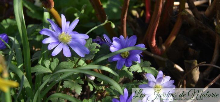 Chroniques de mon jardin : une journée ensoleillée