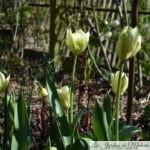 Chroniques de mon jardin: le printemps est là!