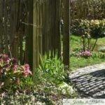 Chroniques de mon jardin: du bonheur à partager