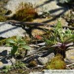 🌱 Semis spontanés sur la terrasse ronde