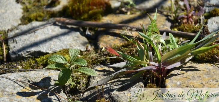 Semis spontanés sur la terrasse ronde