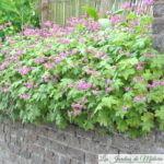 Végétaliser un muret ou une rocaille avec des vivaces