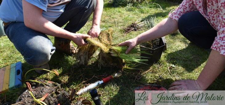 🐸  Travaux d'avril au jardin : Nettoyage du bassin