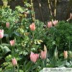 🌷  Chroniques de mon jardin : fleurs d'avril...