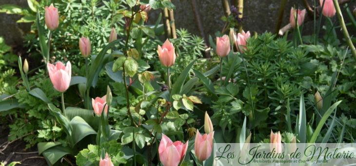 🌷  Chroniques de mon jardin : fleurs d'avril…